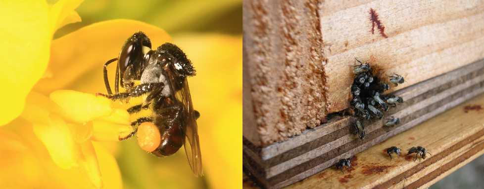 Stingless Bee Honey - Melipoly Organic and Pure Honey