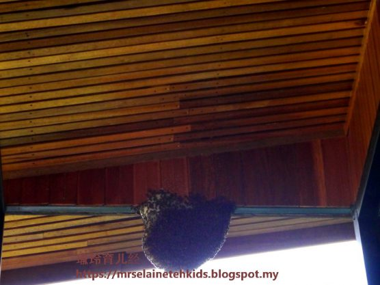 Stingless Bee Farm Bentong - Melipoly - Organic and Pure Honey Supplier